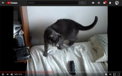 YouTube Makes Its Easier To Track How Much Time You're Wasting Watching Cat Videos