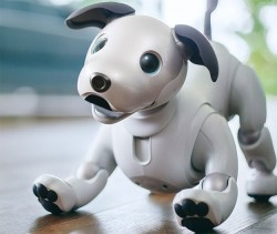 Sony's Aibo Robot Dog Is Super Smart, Super Cute, AI Loyal And Super Expensive