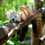 Firefox Browser Use Drops As Mozilla's Worst Microsoft Edge Fears Come True